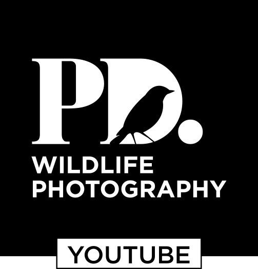 PD. Youtube